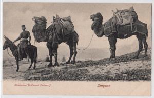 Chameaux Pehlavans (lutteurs) Smyme
