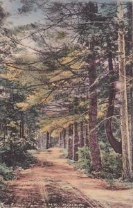 New Hampshire Chocorua The Pines Handcolored Albertype