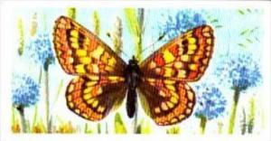 Brooke Bond Tea British Butterflies No 16 Marsh Fritillary