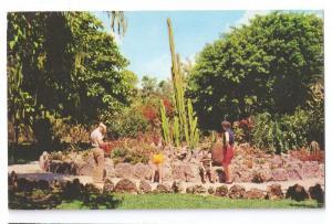 Miami Parrot Jungle Coral Rock Garden Cactus 1960 Chrome