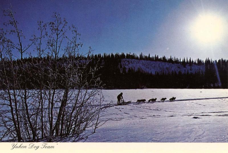 Canada - Yukon Territory. Sled Dog Team