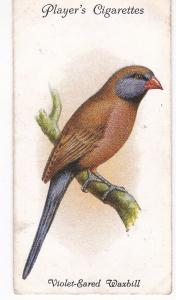 Cigarette Cards Playe Aviary and Cage Birds No 43 Violet-Eared Waxbill
