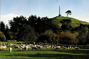 New Zealand Auckland One Tree Hill With Sheep Grazing