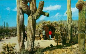 Sonora Desert Museum Tucson Arizona AZ Tunnel Entrance Postcard
