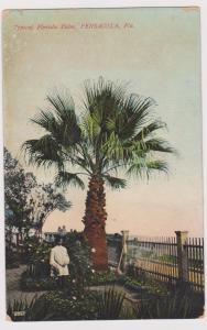 PENSACOLA, Florida, 1900-1910s; Typical Florida Palm