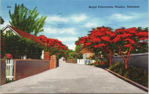 Royal Poincianas Nassau Bahamas c1960 Vintage Linen Postcard D73