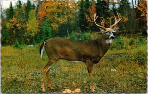 Deer Greetings from Stettler AB Heart of Alberta Unused Vintage Postcard D42