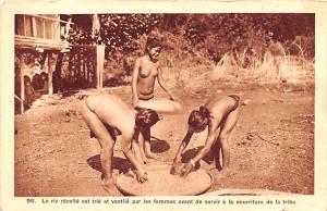 Vietnam, Viet Nam le riz recolte est trie et ventile par les femmes  le riz r...
