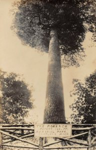 LPM40 Monarch Tree Memorial Park Grayling   Michigan RPPC Postcard