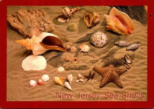 New Jersey Sea Shell Collection
