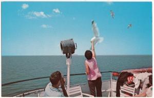 The Siasconset, Martha's Vineyard, Nantucket, Mass, unused Postcard