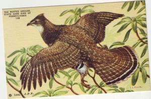PC1 JLs postcard linen penn state bird ruffed grouse signed