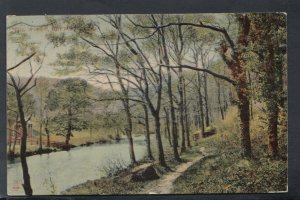Wales Postcard - Trees - The Woods, Bettws-Y-Coed   T10035