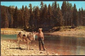 California A Western Prospector Bad Water Bill Gravel Gertie Burro - Chrome