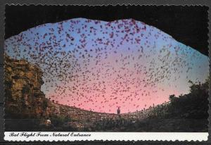 New Mexico, Carlsbad Caverns, Bat Flight from Natural Entrance, unused