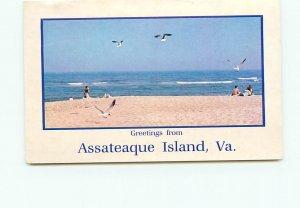 Greetings Assateaque Island Virginia Seashore Beach