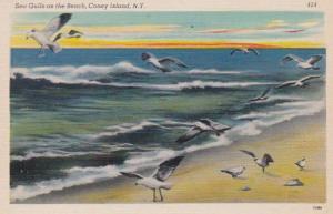 Birds Sea Gulls On The Beach Long Island New York