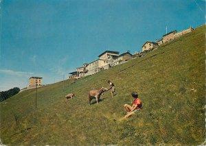 Switzerland Alberghi Monte Generoso Vetta cow grass fed by kid Postcard