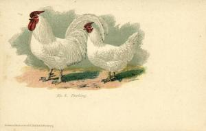Chicken Hen Rooster, Dorking (1910s) No. 08