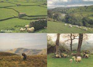 Swaledale Rye Yorkshire Dales Loaf Hill Sheep Painting & RPC 4x Postcard s