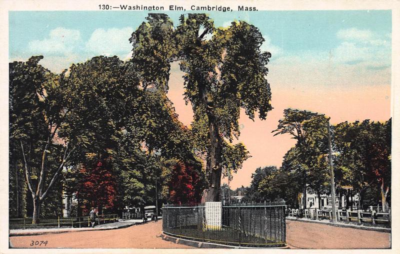 Washington Elm, Cambridge, Massachusetts, Early Postcard, Unused