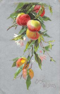 Best Wishes view of ripe fruit on tree limb by C Klein antique pc Y14148