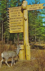 Mule Deer and Rustic Directional Sign Banff National Park Canada