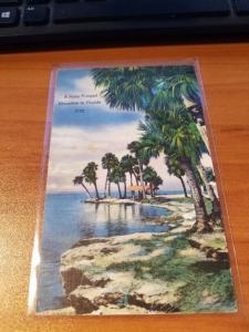 Antique/Vintage Florida Postcard, A Palm-fringed Shoreline in Florida