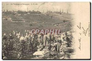 Old Postcard Wine Harvest in Burgundy