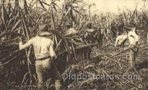 Reaping Sugar Cane Farming, Farm, Farmer, Postcard Postcards Trinidad Reaping...