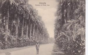 India Calcutta The Avenue Of Palm Trees