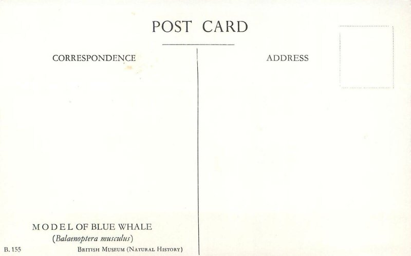 Animals Postcard Natural History British Museum Blue Whale Model