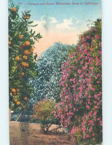 Divided-Back BOTANICAL SCENE Postmarked Long Beach California CA HJ7240