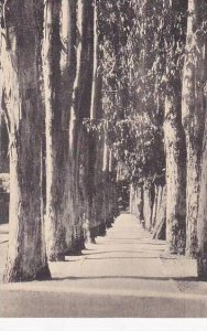 Califorinia Oakland Eucalyptus Path Mills College Albertype