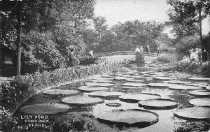 St Paul Minnesota~Closeup of Lily Pond in Como Park~Footbridge Beyond c1910 B&W
