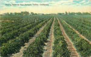 C-1910 Farm Agriculture Drying Raisins San Joaquin Valley California 3374