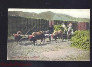 PORTO RICO LOADING SUGAR CARE PUERTO RICO OXEN DRAWN FARMING OLD POSTCARD