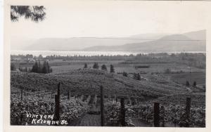RP: Vineyard , KELOWNA , B.C. , Canada , 30-40s