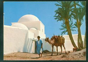Djerba Tunisia Island Man with Camel Goat Palm Trees - Africa Postcard