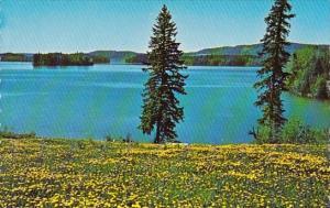 Canada Bridge Lake Williams Lake British Columbia