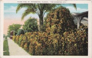 Florida St Petersburg Residential Scene With Flame Vine