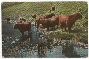Greetings From The Farm Fishs Eddy NY 1909