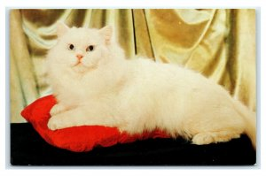 Postcard Queen of the Angoras fluffy white cat sitting on red pillow A47
