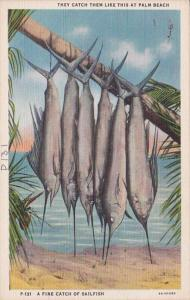 Florida Palm Beach Fishing A Fine Catch Of Sailfish Curteich