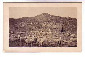 Sheep Ranch with Cowboy,