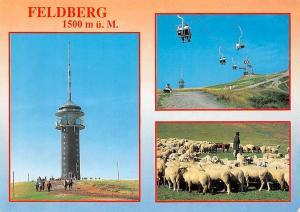 Feldberg, Turm Tower Cable Car Sheeps Animals Shepherd
