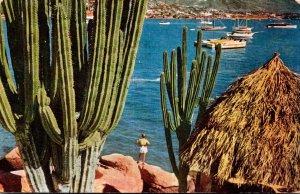 Mexico Acapulco Harbor Scene Thrugh Giant Cactus 1951
