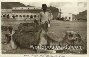 Aden Republic of Yemen Camel at Rest After Feeding Aden Camel at Rest After F...