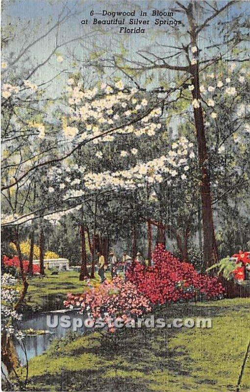 Dogwood - Silver Springs, Florida FL