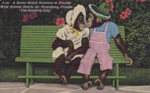 Florida Saint Petersburg A Green Bench Romance At Florida Wild Animal Ranch 1955